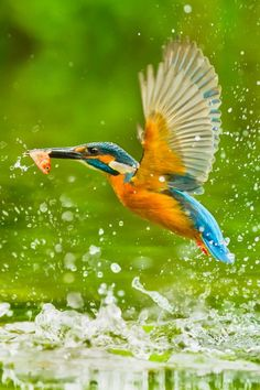 Kingfisher by Sue Hsu