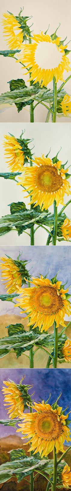 Watercolor Painting Demonstration of Sunflowers by Richland, WA Artist Lisa Hill