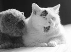 ¡Qué tierno!  #Gatos #BlancoYnegro