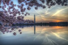 Cherry Blossoms....gorgeous photography by Michael Donahue