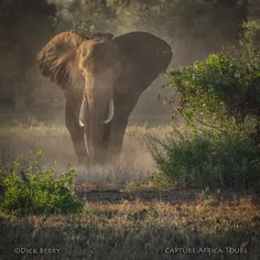 Magic in Amboseli...Join us on this Journey of a Lifetime to one of the most magical places on Earth...Amboseli National Park, Kenya. In the Shadow of Giants will follow elephants in their natural environment. Contact us at info@captureafricatours.com