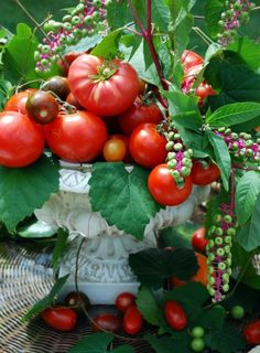 Beautiful tomatoes!  this is my all time favorite arrangement... the lowly poison apple displayed in the elegant vase, polk berries, varietal tomatoes... priceless