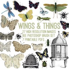 Wonderful Wings and Things Kit - TGF Premium! - The Graphics Fairy