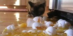 Who wants eggs for breakfast?