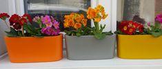Barevné květináče Planter Pots