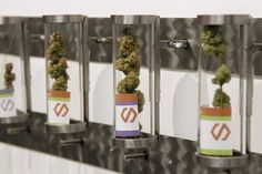 Displays at Shango Cannabis shop on first day of legal recreational marijuana sales beginning at midnight in Portland, Oregon, Oct. 1, 2015. The sale of marijuana for recreational use began in Oregon Oct. 1, 2015, as it joined Washington state and Colorado in allowing the sale of a drug that remains illegal under federal law.