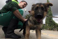 Madrid propone 30 mil euros de multas por maltrato animal