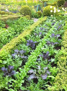 A tapestry of salad! Barnsley House, Glos, UK. Photography by Christine O'Neill.
