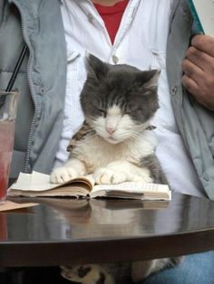 "A Cat Joins its Owner Reading a Book at a Tokyo Cafe ~~ ""OK, so Jehovah says I can't eat mice any more. There must be a scripture in here somewhere that says it's ok to eat mice."" lol"