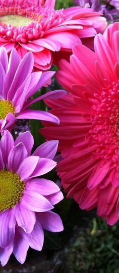 Daisy via http://hmkh.com #flowers