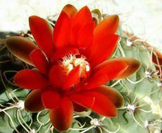 Cactus: conoce sus nombres
