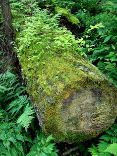 (log by Dave Bonta, via Flickr)