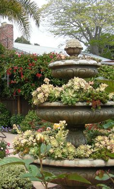 Drain the fountain and let it rain succulents. #garden #waterwise