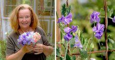Experten ger råd: Så lyckas du med luktärt!   Land.se Gardening, Design, Lawn And Garden, Horticulture
