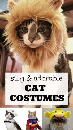 Cats are dignified. Cats are elegant. And if you have a cat or two, you know that some cats are downright strange! Particularly strange are those who love to get dressed up in costume. Strange, yes. Cute Cat Costumes, Pet Costumes, Halloween Costumes, Animal Costumes, Cute Cats, Funny Cats, Funny Animals, Cute Animals, Crazy Cat Lady