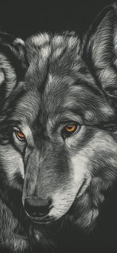 Iphone Xs Max Wallpaper Wolf - find your wallpaper - Iphone Xs Max Wallpaper Wolf – find your wallpaper - Hd Dark Wallpapers, Wallpaper Images Hd, Stunning Wallpapers, Graphic Wallpaper, Pretty Wallpapers, New Live Wallpaper, Horse Wallpaper, Animal Wallpaper, Sad Wallpaper