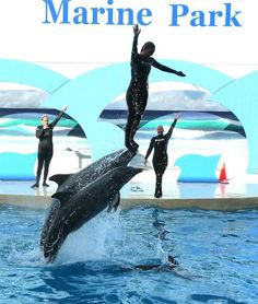 Gulf World Marine Park in Panama City Beach, Florida. This would totally be my birthday trip if I didn't already have plans. Darn!! @Vanessa Bishop