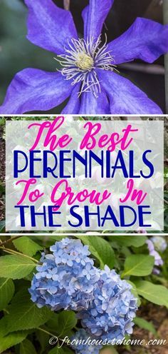 GREAT list of plants to grow in shade with lots of different perennials and shrubs for growing outdoors in your garden. It really helped me pick plants for the flower beds in my backyard. #fromhousetohome #ShadePlants #Gardening #GardeningTips