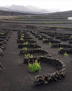 thesuites LANZAROTE buenavista • a volcanic destination #lanzarote #eco #slow #thesuites #residences #nohotels