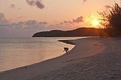 Aqua Vista, Eleuthera, Bahamas  Working remotely?