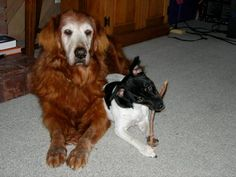 The late Belle, and heir apparent Scottie