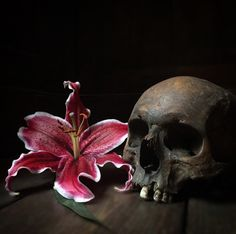 Screaming Skull, Skull Artwork, Skull Head, Human Skull, Animal Skulls, Vanity, Animals, Beautiful, Instagram
