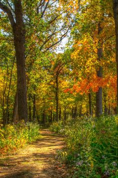 Wyalusing State Park trail (Wisconsin) by Marc Kohlbauer