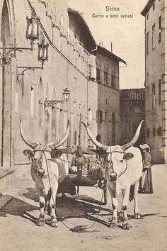 Come era Siena in cartolina