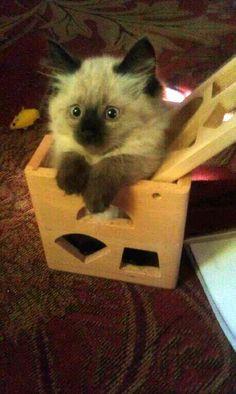 If it fits...