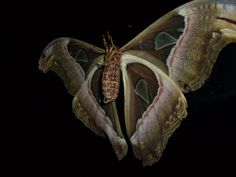 moth by ~5-4-3-2 on deviantART