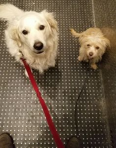 6 Tips for Navigating Hallways and Elevators With Your Dog  #dogs