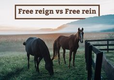 "Is is ""free reign"" or ""free rein""? This week we're feeling as right as reign..."