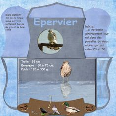EPERVIER