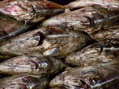 Fish market. Maitencillo Chile. by PepeMarin  IFTTT 500px