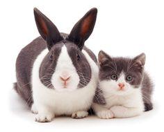 Blue Dutch rabbit rabbit and matching kitten. (Photo: Warren photographic/Caters News)