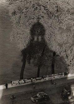 Buy online, view images and see past prices for Willy RONIS - Ombre de l''institut - Paris, 1956 Epreuve argentique (c. Robert Doisneau, Paris 3, Paris France, Willy Ronis, Beautiful Paris, Louvre, Eiffel, French Photographers, Vintage Paris