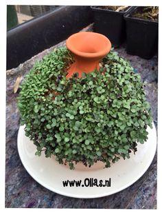 olla in garden Water Plants, Water Garden, Garden Pots, Container Gardening, Gardening Tips, Orchid Pot, Natural Garden, Edible Plants, Clay Pots