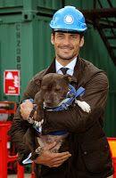 David Gandy Frequenta il lancio di Canili aggiornati alle Battersea Dogs and Cats Home page ~ David James Gandy