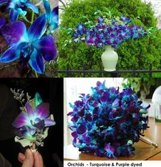 Lavender And Turquoise Wedding | Turquoise and Purple Orchids - you can order these specialty dyed ...