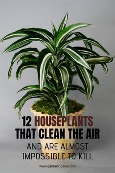 """Question: """"What are the best low-light house plants that are cat safe?"""" Question from Margaret of Houston, Texas Answer: """"Each of these eight beautiful house plants. Container Plants, Container Gardening, Gardening Tips, Gardening Vegetables, Indoor Gardening, Balcony Gardening, Fairy Gardening, Garden Plants, Garden Landscaping"""