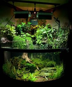 aquascape with with finches and fishes