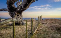 One Tree Hill, Auckland. New Zealand Landscape, Kiwiana, One Tree Hill, Landscape Photographers, Auckland, Island, Park, City, Places