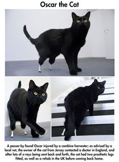 Oscar with prostethics cat legs