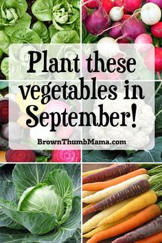 Yes, you can plant vegetables in September! These 15 veggies can handle the heat without a problem. Includes best varieties, planting tips, and recipes for your harvest. #gardening #vegetablegarden #forbeginners #homesteading #organicgardening Vegetable Planting Calendar, Vegetable Garden Design, Planting Vegetables, Growing Vegetables, Fruits And Vegetables, Vegetable Gardening, Gardening For Beginners, Gardening Tips, Urban Gardening