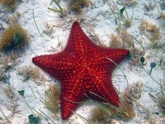 Try drift snorkeling at Deep Water Cay in The Bahamas to see starfish in every color of the rainbow! #ItsBetterInTheBahamas