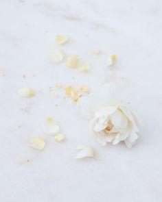 M i n u t e s – Pale yellow roses from my garden, August 2016.