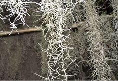 Spanish moss chain making inspiration ideas  - Unlimited Possibilities: Inspiration for Making Unique Handcrafted Chain - Jewelry Making Daily