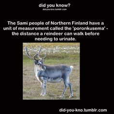 """Did You Know: The Sami people of Northern Finland have a unit of measurement called the """"poronkusema"""" - the distance a reindeer can walk before needing to urinate?"""