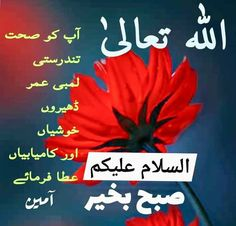 Good Morning Msg, Morning Wish, Morning Quotes Images, Good Morning Images, Islam Facts, Urdu Quotes, Workouts, Album, Gud Morning Images