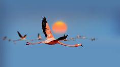 Photo Sunrise Journey by Mostafa Ammar on 500px
